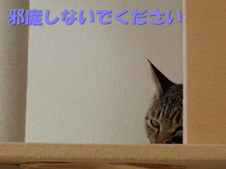 20130817_82.jpg