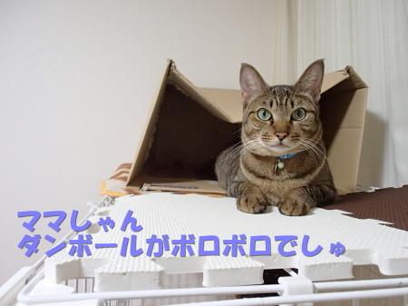 20130829_10.jpg
