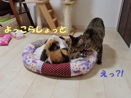 20130901_44.jpg