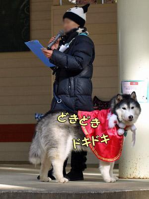 司会犬ポっちゃん