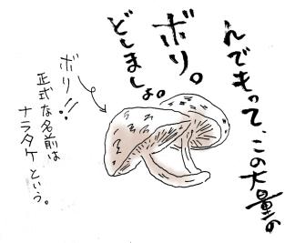maru015c-3.jpg
