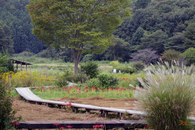 20130923彼岸花_花之江の郷09