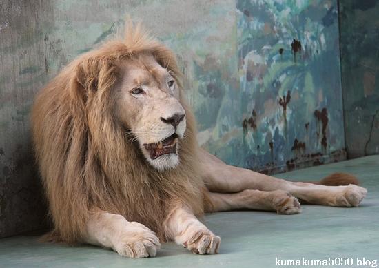 ホワイトライオン_65