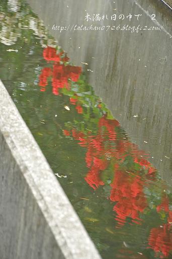 水面に映ったバラ
