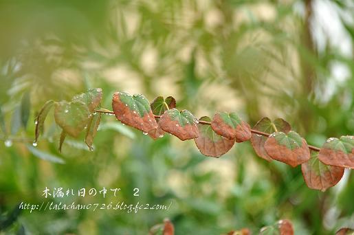 二色の葉っぱ
