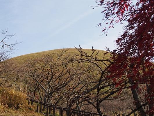 oomuro-20131124-11s.jpg