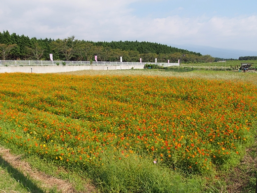 susono-20130912-11s.jpg