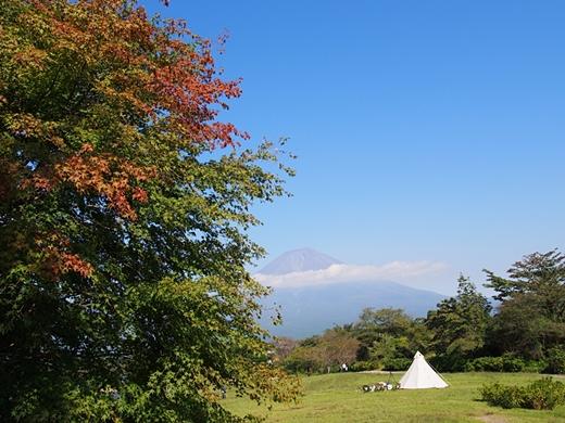 tanuki-20130918-06s.jpg