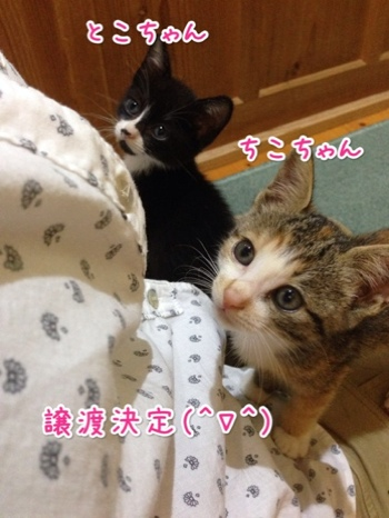 fc2blog_20140928215732b5f.jpg