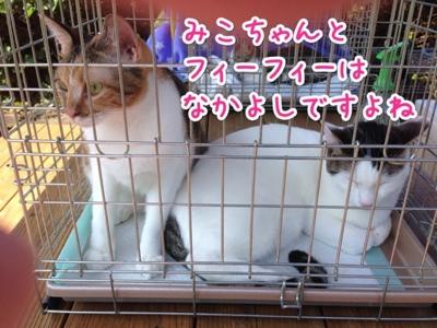 fc2blog_20140929214706948.jpg