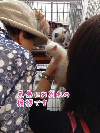 fc2blog_20141019224546852.jpg