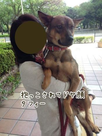 fc2blog_20141019225347e7e.jpg