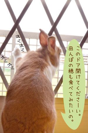 a_DSC3362.jpg