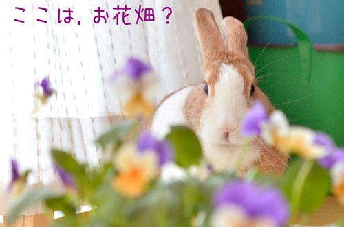 a_DSC3779.jpg