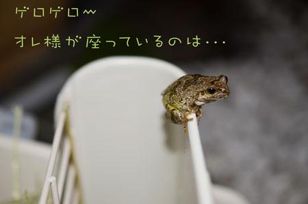 a_DSC4389.jpg