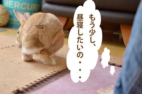 a_DSC5881.jpg
