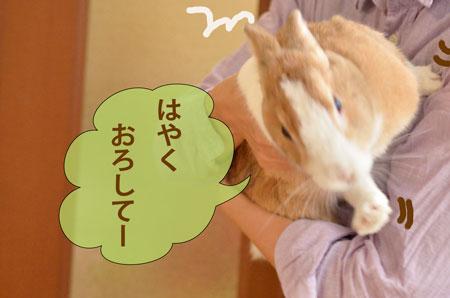 a_DSC6244.jpg