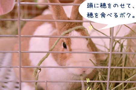 b_DSC3983.jpg