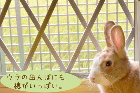 f_DSC3359.jpg
