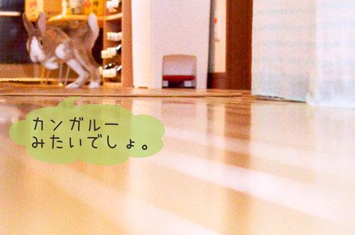 j_DSC8937.jpg