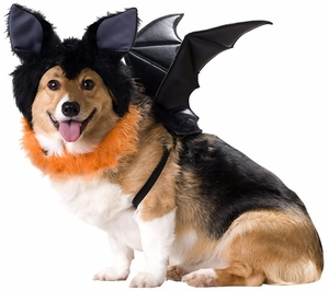 animal-planet-bat-dog-costume-medium-5.jpg
