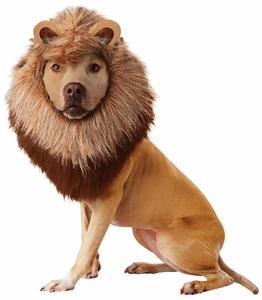 animal-planet-lion-dog-costume-large-2.jpg
