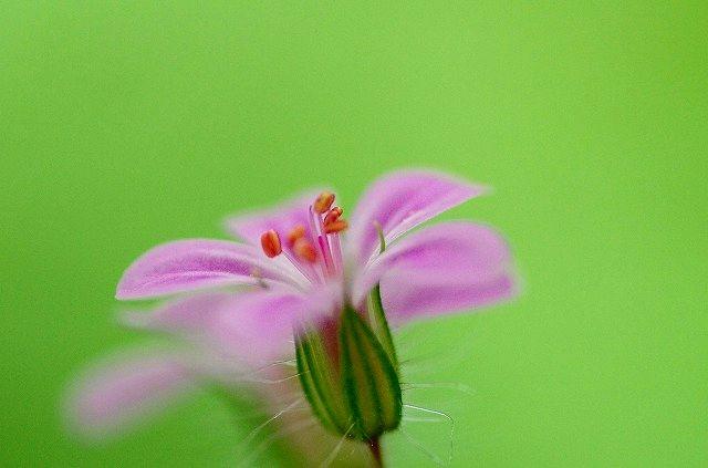 花に酔う(マクロ)