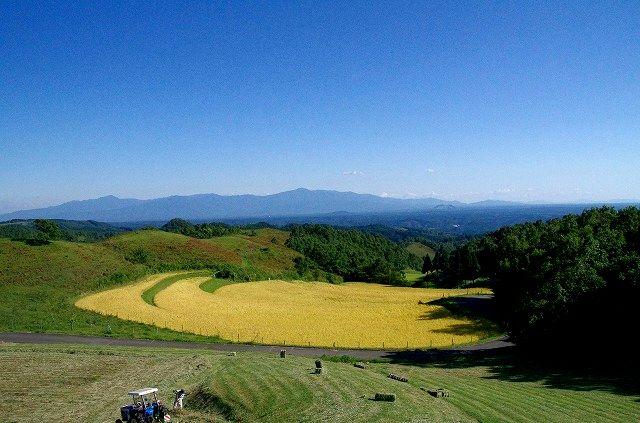 収穫前の扇田