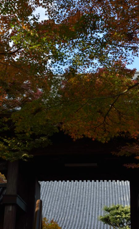 2013-11-22_0006-450.jpg