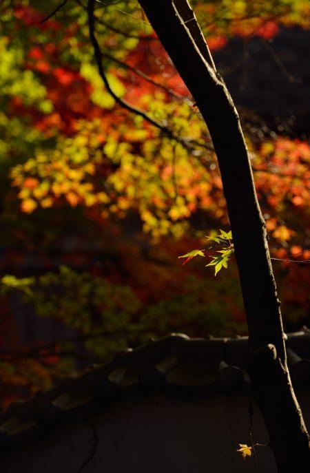 2013-11-22_0022-450.jpg