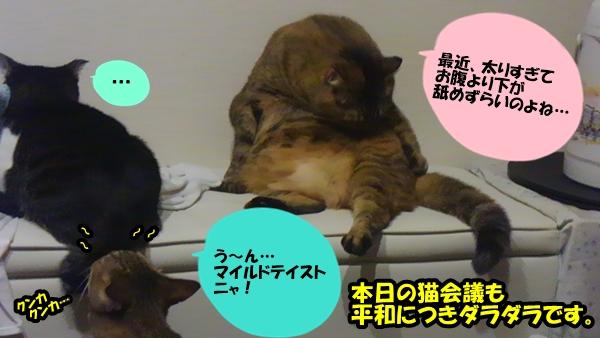 本日の猫会議