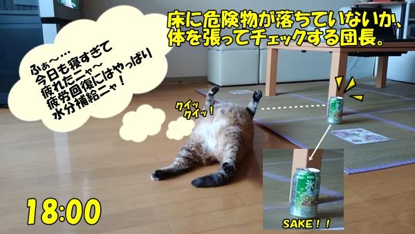 猫生を考える1