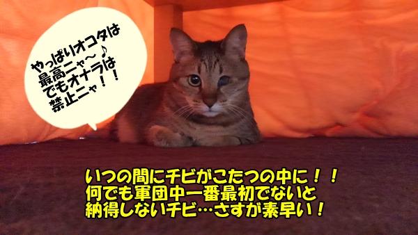 ねことコタツ2