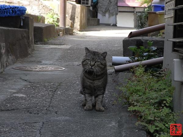 江の島 のら猫 20080501