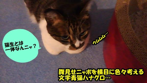 猫生を考える2