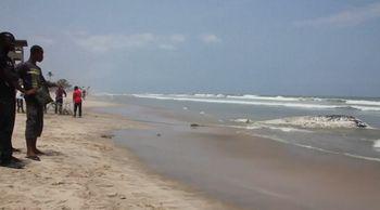 【前例のない事態】ガーナに相次いでクジラの死骸が漂着 1週間で5頭も