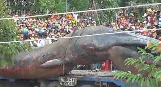 ベトナムの土中から10m超の巨大生物が発掘される