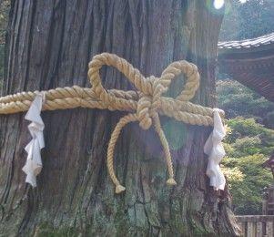 和歌山県 那智の滝前 30㍍スギ巨木、突然倒れる 【御神木】