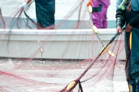 石川県 またダイオウイカが水揚げされる