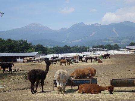 14アルパカ牧場