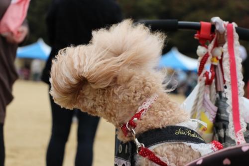 動物愛護フェスティバル2013