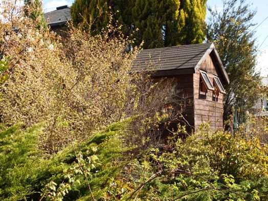 my-garden 010 (5)