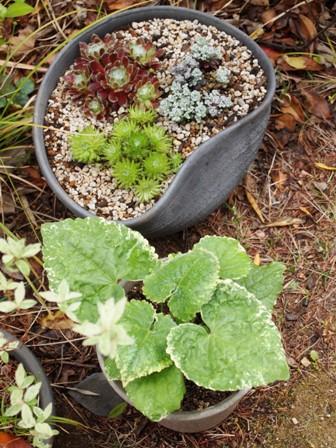 my-garden 123