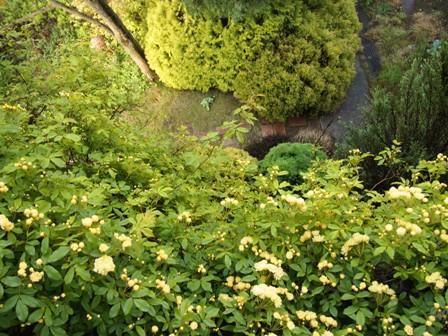 my-garden 011 (2)