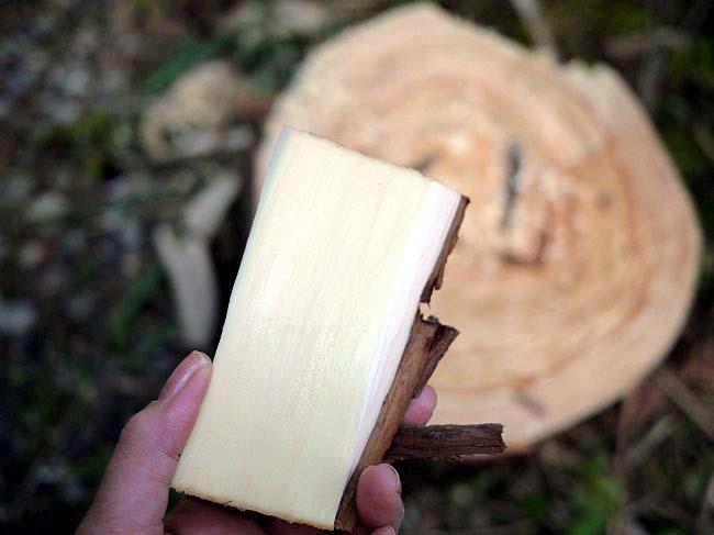 加子母村・森林ツアー