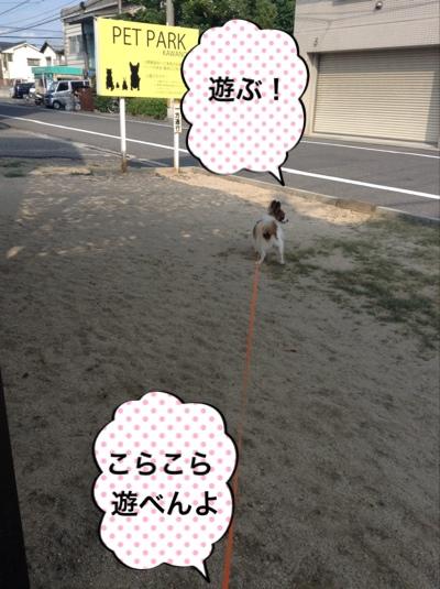 fc2blog_201409271825424b1.jpg