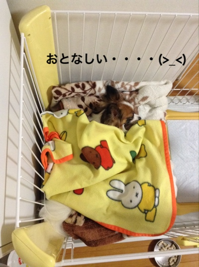 fc2blog_201409271848592e5.jpg