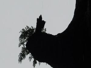 2013-6-22鹿児島 2