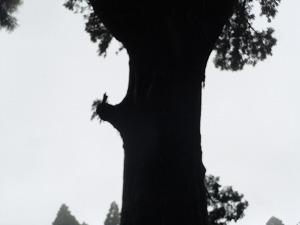 2013-6-22鹿児島 3
