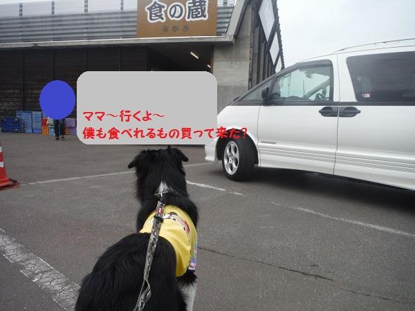 DSCF3164-1.jpg